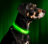 LED Night-Safety & Anti-Lost Dog Collar - Project Lvl Online Store