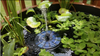 MINI Solar Powered Floating Bird Bath Water Panel Fountain Pump Garden Pond Pool - Project Lvl Online Store
