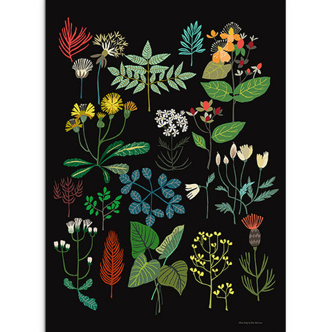 Brie Harrison plant study botanical print native British flora for Modern Craft