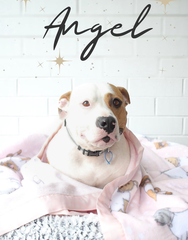 MEET ANGEL FROM GEELONG ANIMAL RESCUE
