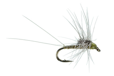 Sheets' Quill Stacker Olive