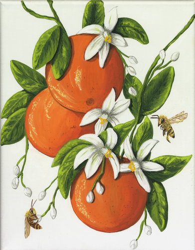 Art Print - Orange Delight