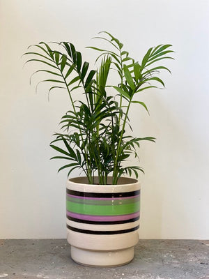 Artist Stripe Palm