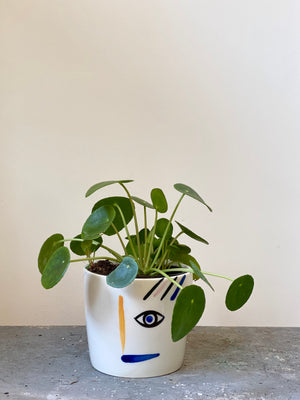 Pilea Expressions