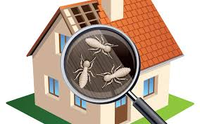 Termites Inspection Request