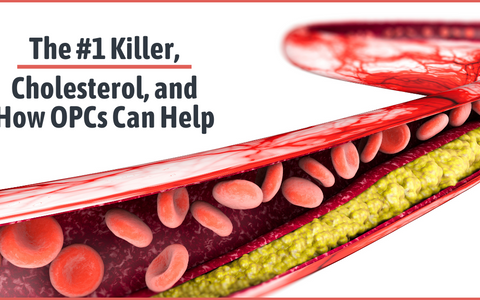 The Number 1 Killer, Cholesterol and How OPCs Can Help