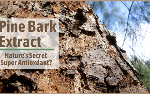 Pine Bark Extract: Nature's Secret Super Antioxidant?