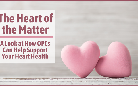 The Heart of the Matter: A Look at How OPCs Can Help Support Your Heart Health