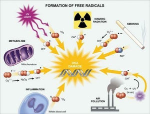 6 Factors Which Increase Free Radical Damage