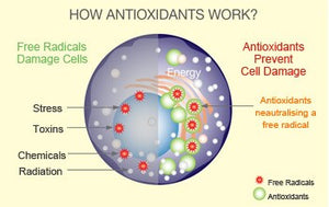OPCXtra – The Benefits of Super Antioxidants