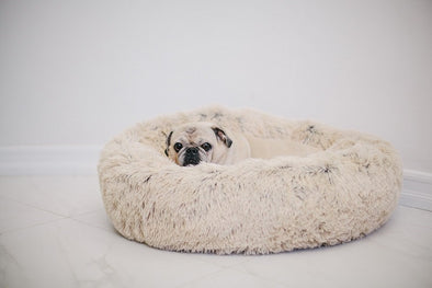 4 Reasons to Buy a Dog Bed for Your Best Friend
