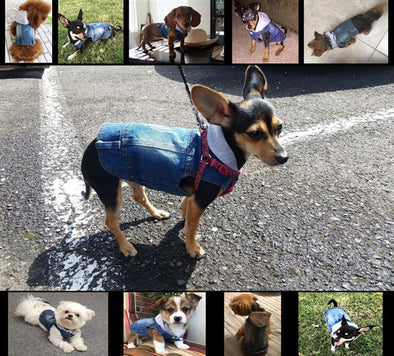 How to Shop For the Best Doggy Clothes?