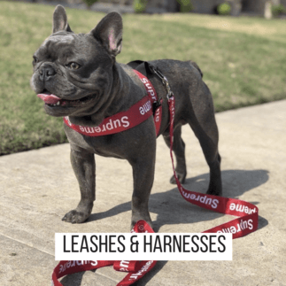 LEASHES & HARNESSES