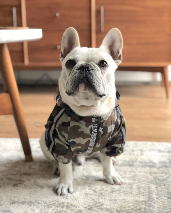 New Camo Dog Rain proof Jacket