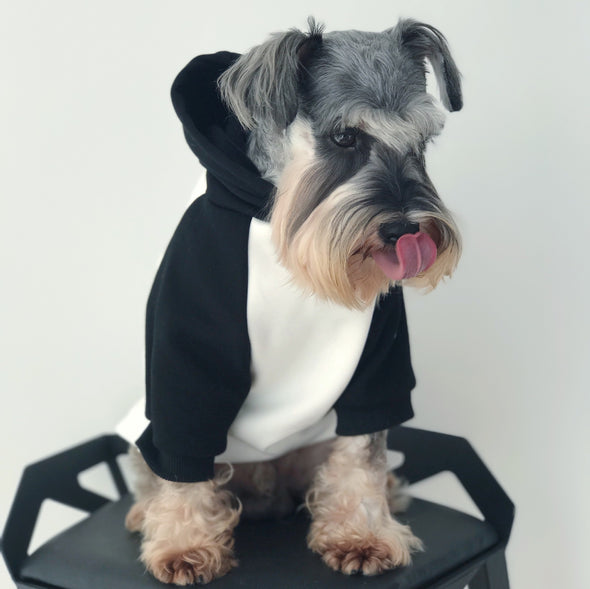 Champup Multi Color Hipster Hoodie