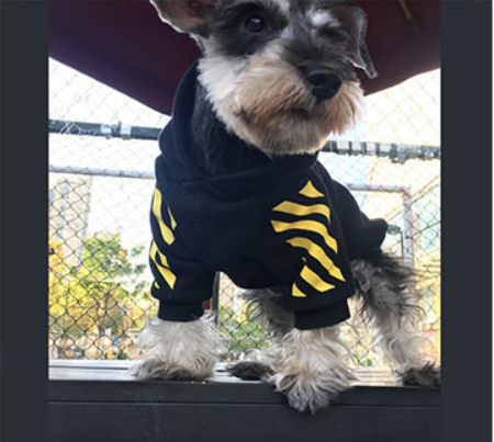 bed70f85497a Off-white Yellow Box Swag Hoodie (HOT ITEM!) – Doggy Swag Shop