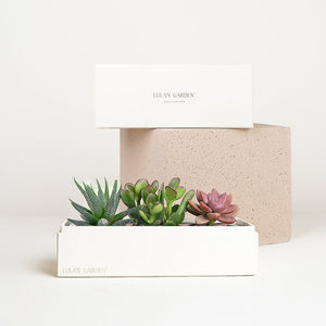 Original Jewel 'Happy Birthday' Succulent Box