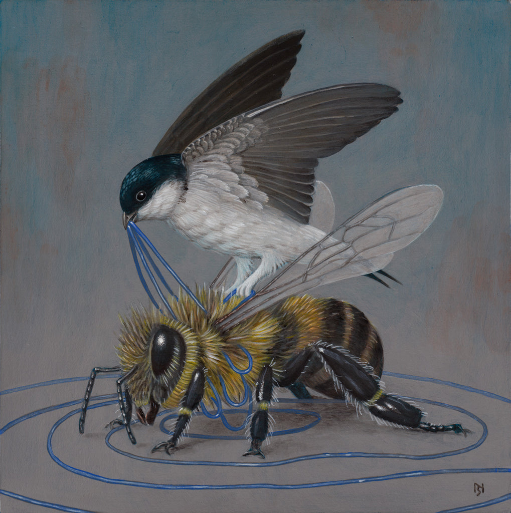 Nick Sheehy - Bee and bird