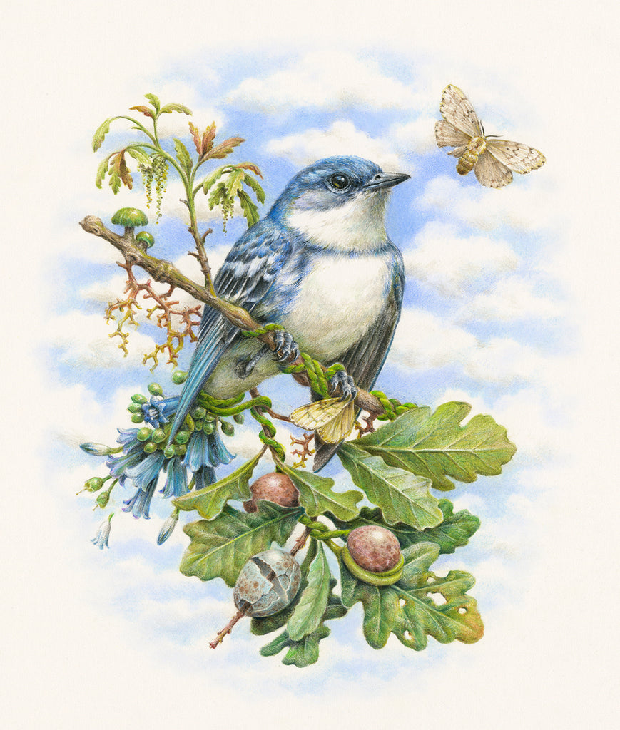 Courtney Brims - 'Cerulean Warbler'