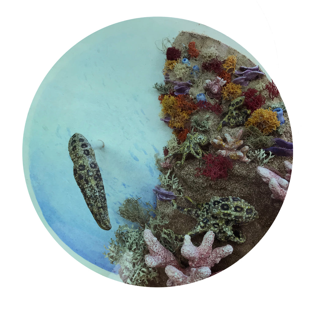 Danielle Schlunegger-Warner - Chromatic Chatter (Blue Ringed Octopus)