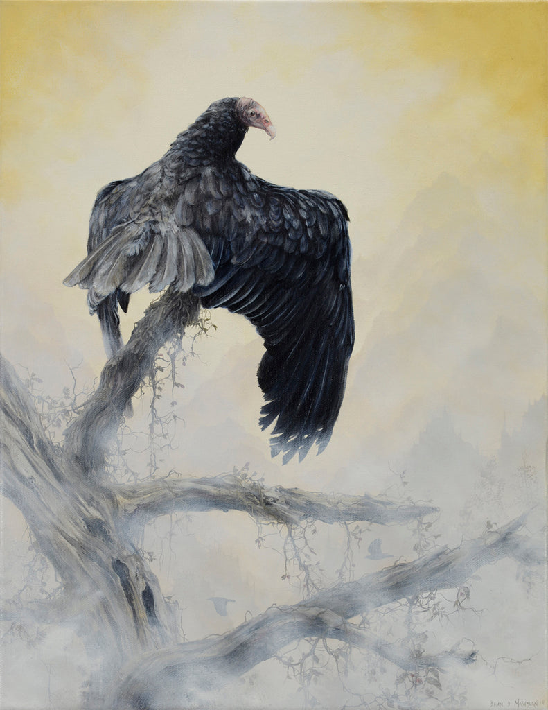 Brian Mashburn - Turkey Vulture Perched