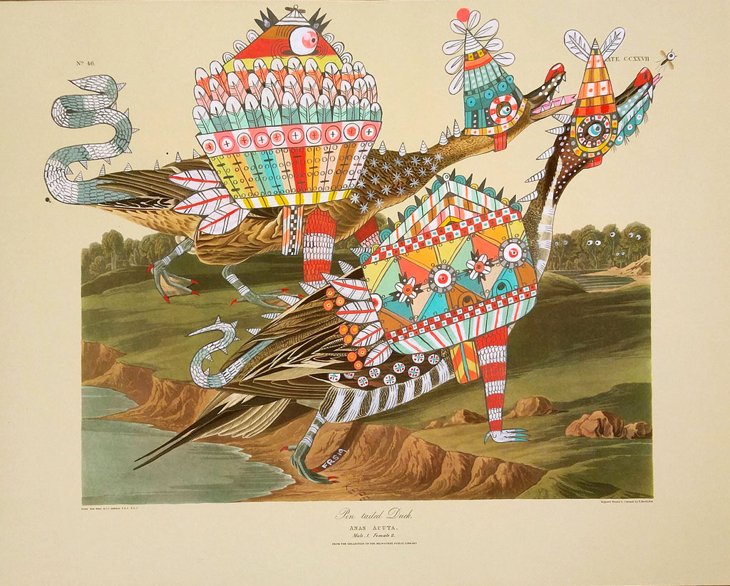 Ferris Plock - The great toothed turtle ducks