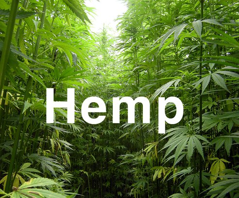 Where does hemp begin?