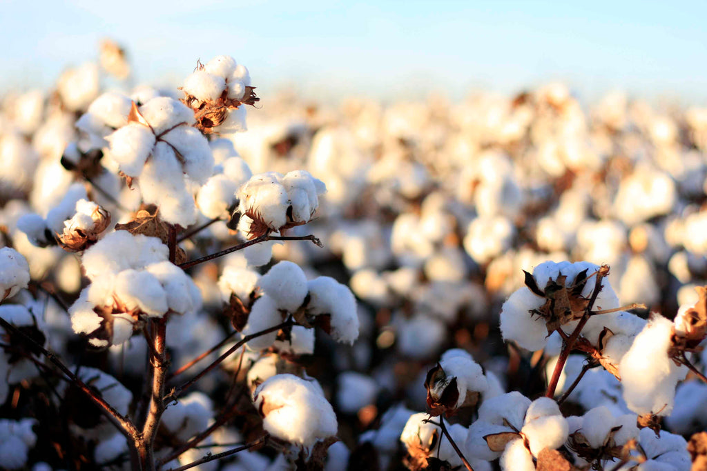Why Organic Cotton in Your T-shirt Matters