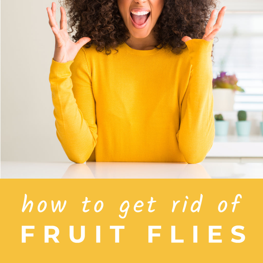 How to Finally Get Rid of Fruit Flies