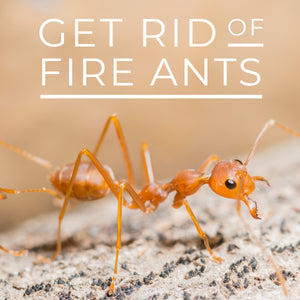 This Is the Best Way to Control Fire Ants