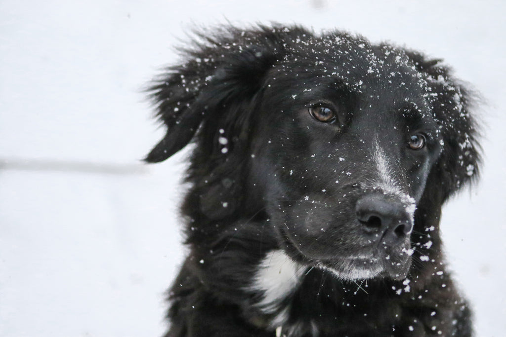 Is There Really a Pet-Friendly Ice Melt?