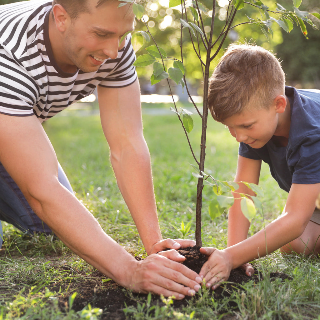 Summer Projects for Dads to do Around the Yard