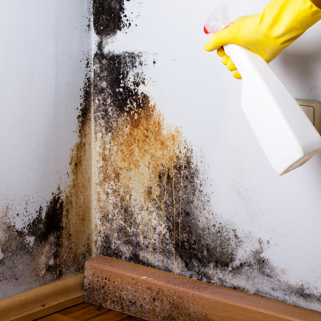 What You Should Do at the First Sign of Mold