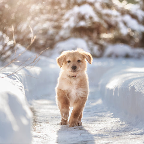 puppy pet safe ice melt snow