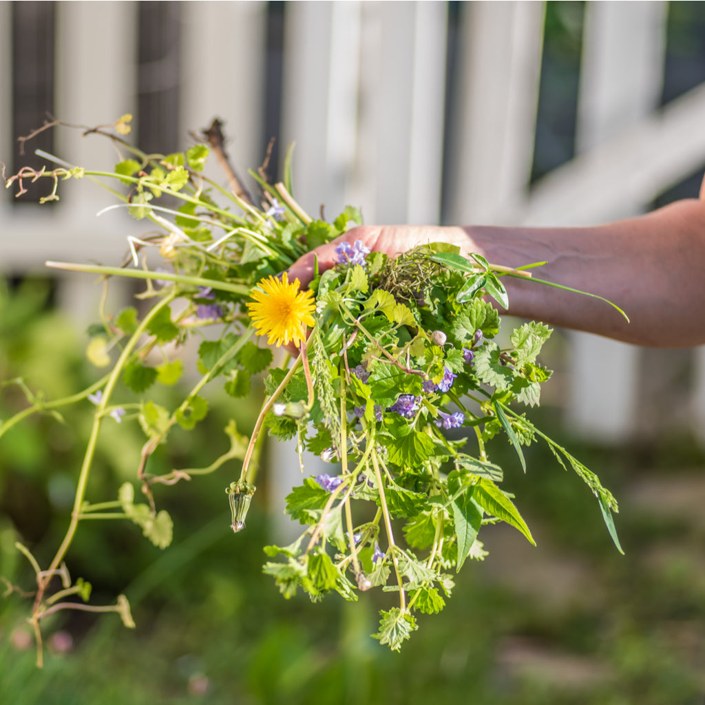 Common Weeds Every Gardener Should Know