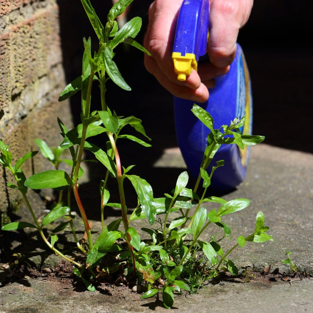 How Does Vinegar Weed Killer Work to Control Weeds