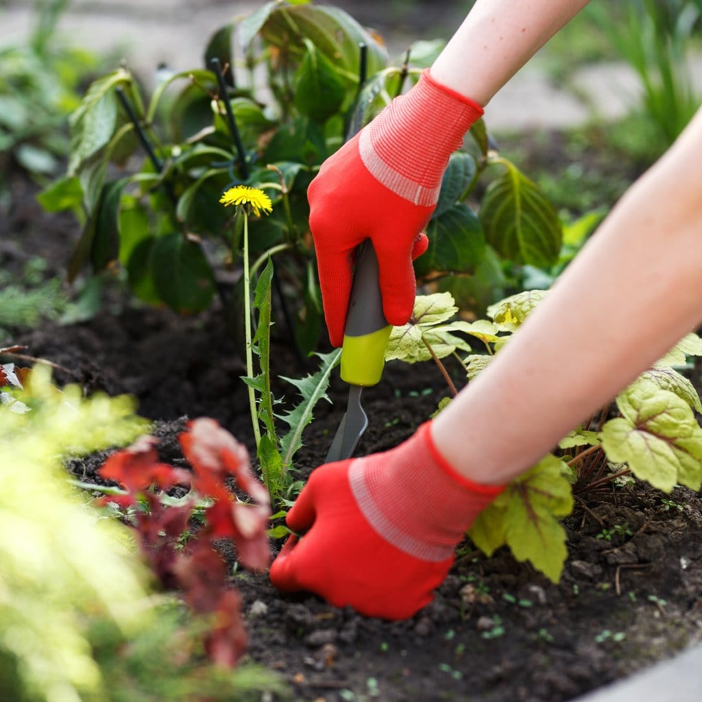 Non Toxic Weed Control Tips