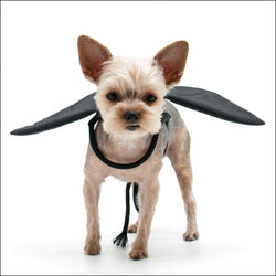 Bat Dog Wings