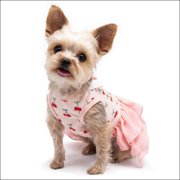 Cherish Cherry Dog Dress