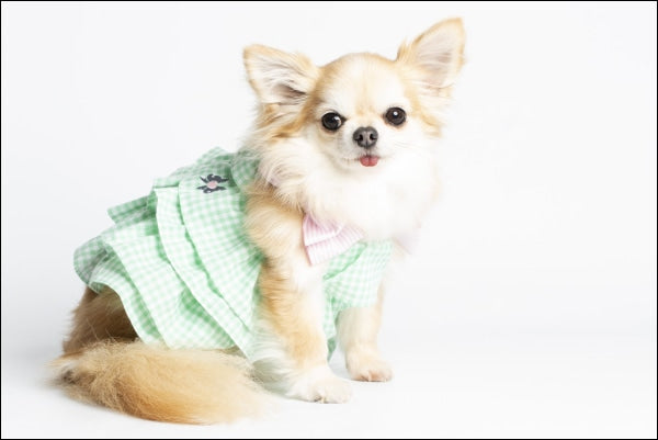 Sweet Vanilla Dog Dress Pastel Green
