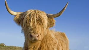 15% OFF Orkney Highland Coo Face mask was £8.95 now £7.60