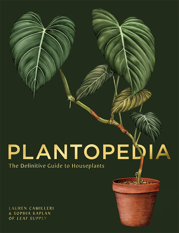 Plantopedia: The Definitive Guide to House Plants