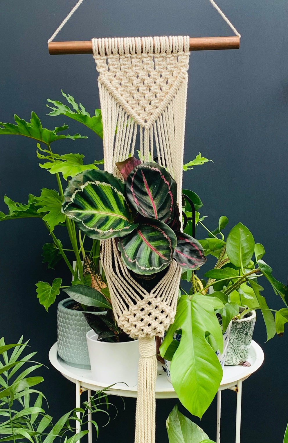 Cream Wall Plant Hanger