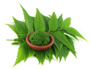 Neem Powder (Azadirachta indica) Anti-Dandruff Hair DIY Packs & Anti-Acne Face Packs