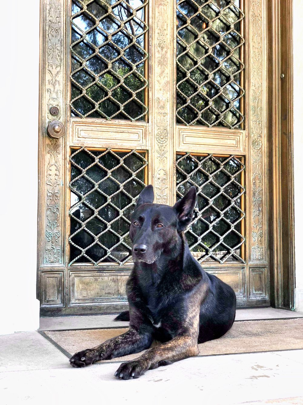 dog laying in front of elegant door