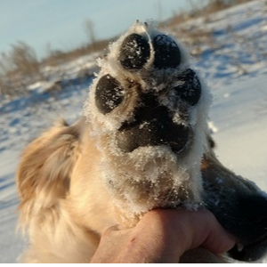 Protect Your Dog from Road Salt with Dog Paw Balm