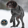 Road Salt and Ice Melt are Dangerous to Your Dog