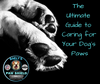 The Ultimate Guide to Caring for Your Dog's Paws