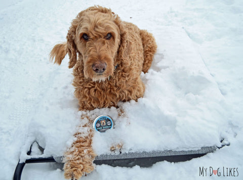 Baely's Paw Shield in Winter Weather
