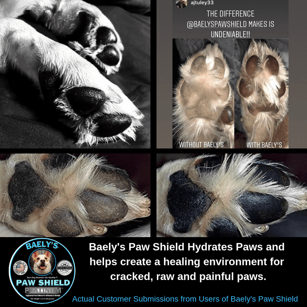 Baely's Paw Shield Hydrates and Heals Cracked Paws